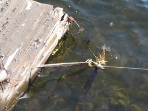 dock_rescue2