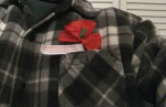 red_poppy